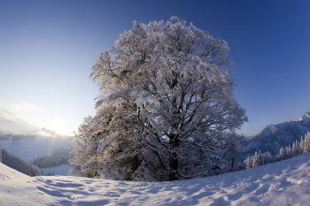 BR Bayrischzell Winter Landschaft Schnee  3
